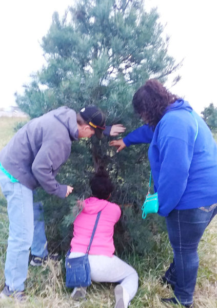 traditions of christmas - the tree | coyotehill.org