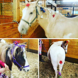 pretty pony hair dos for family therapy session | coyotehill.org
