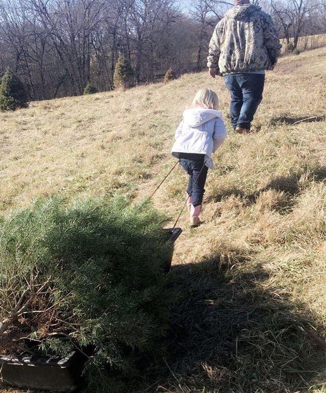 Dad helps her pick the perfect Christmas tree | coyotehill.org