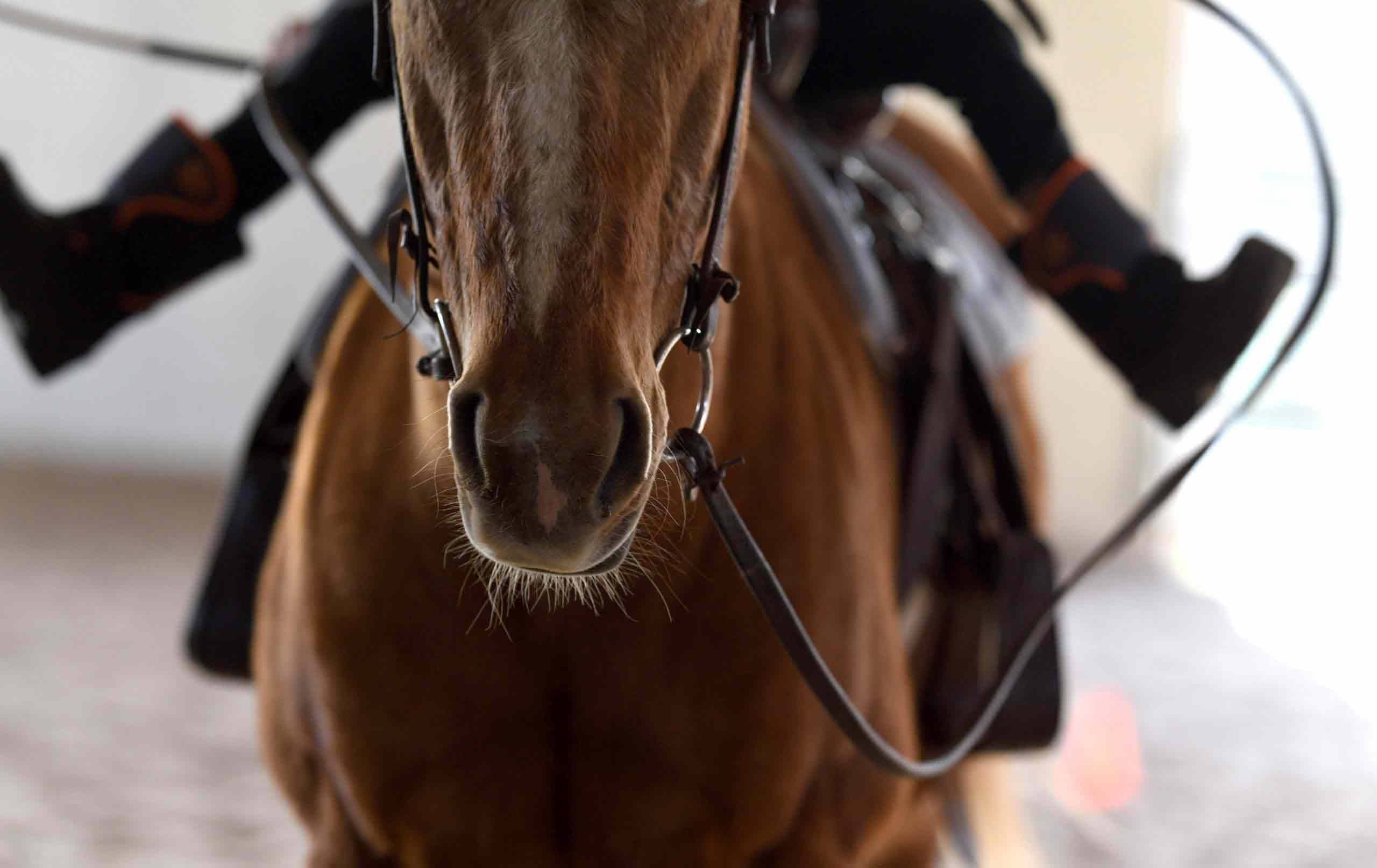 Equine Program