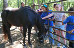 Meet Ranger and Roy – Two Coyote Hill Horses